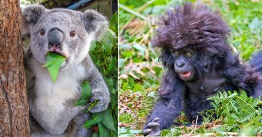 animales que quedaron sorprendidos