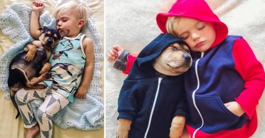 bebe y perro son los mejores compañeros de siestas