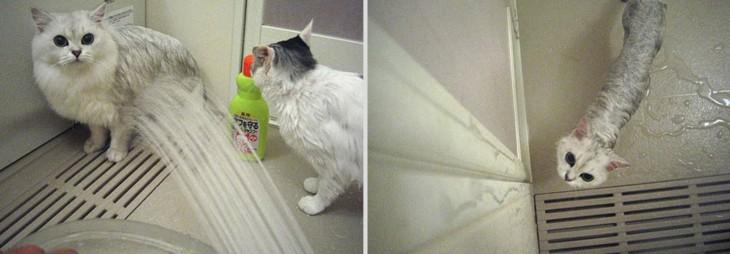 22 Fotos Hilarantes De Gatos Mojados