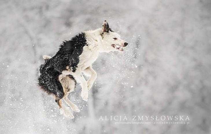 perro fotografiado cuando brinca