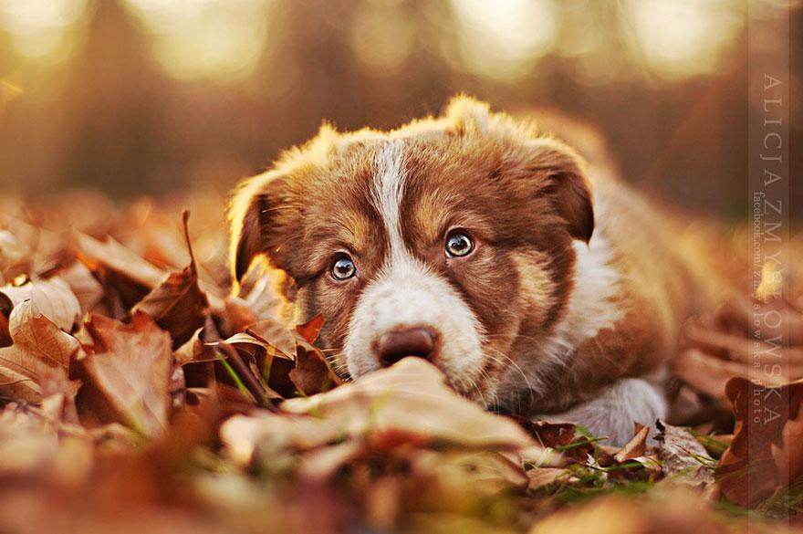 bella sesi243n de fotos con perros como modelos