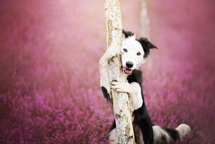 perro blanco con negro agarrado de un arbol