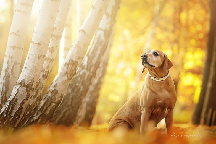 perro labrador dorado a un lado de un arbol