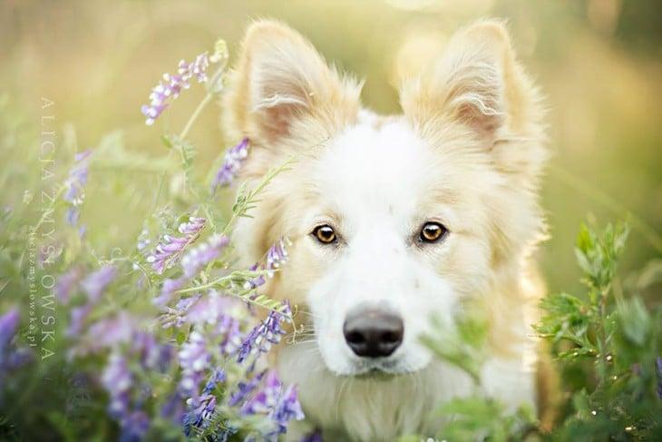 perro blanco atento
