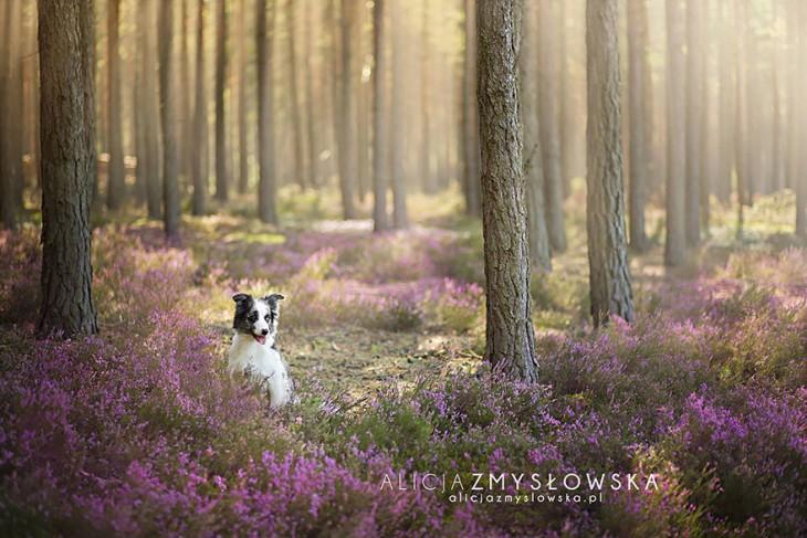 perro fotografiado en el bosque