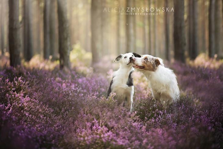 perro besando a otro perro