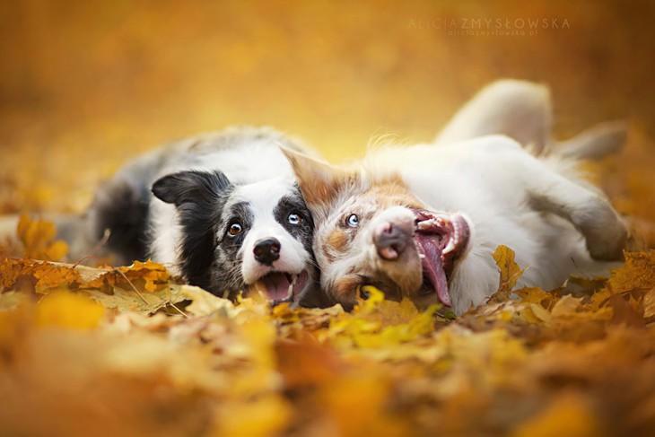 perros en el suelo felices con lengua de fuera