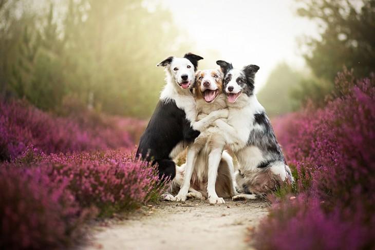 tres perros abrazandose
