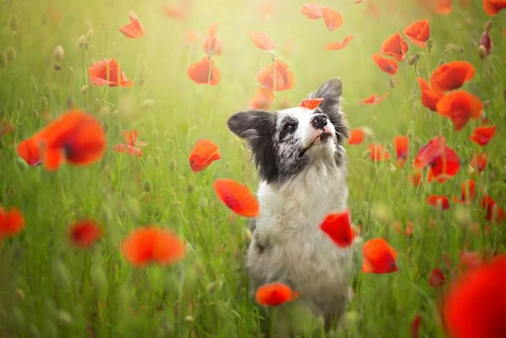 perro entre flores de color naranaja