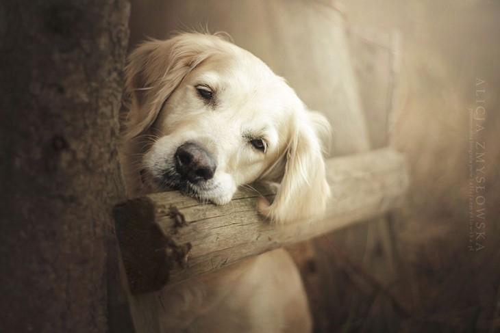 perro con cara triste sosteniendose en una valla