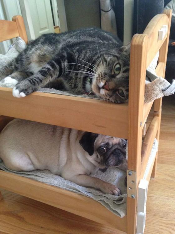 gato y perro durmiendo en cama de muñecas