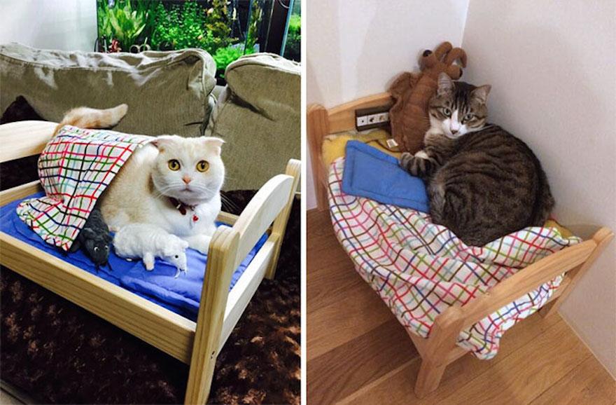 japoneses transforman camas de mu ecas en camas para gatos