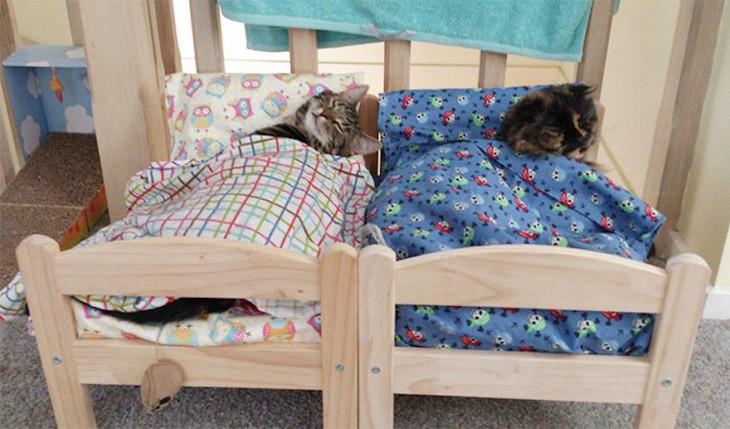 gatos durmiendo en cama de muñecas