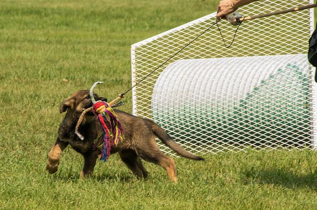 perrito en entrenamiento