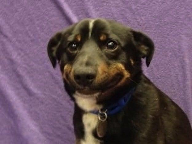 perro que parece que esta sonriendo