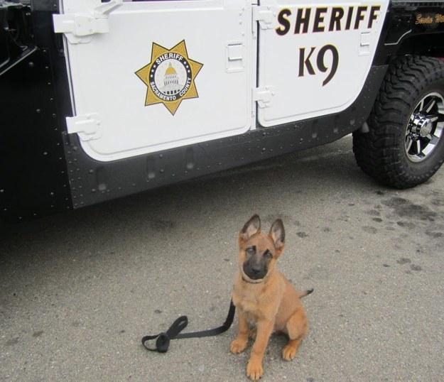 cachorro con correa al lado de patrulla