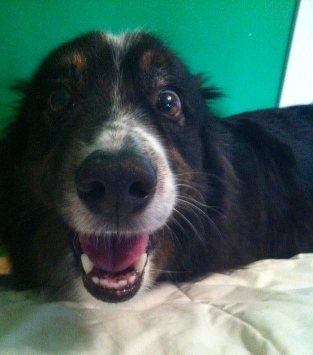 perro que tiene cara de sorpresa enseñando la lengua