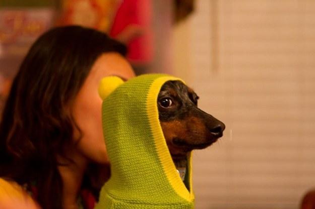 perro con sueter amarillo