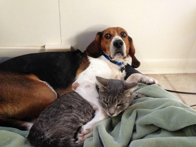 perro acostado junto a un gato