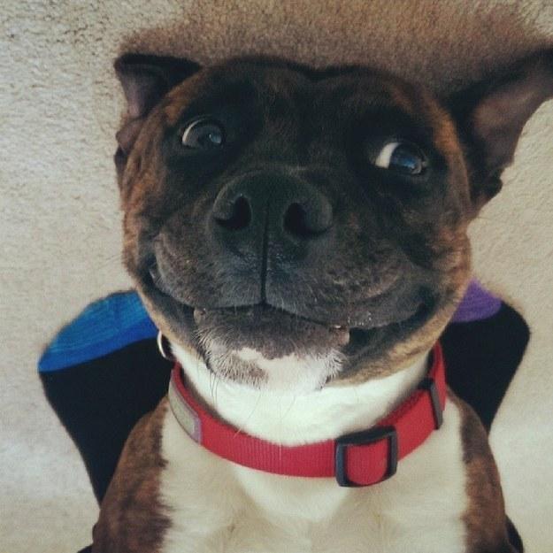 perro feliz con los colmillos