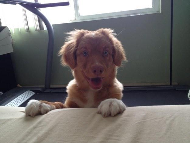 perrito con cara de sorpresa