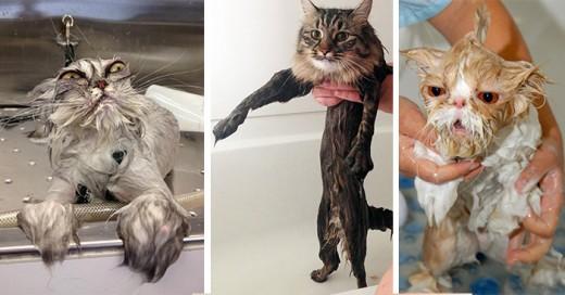 gatos mojados por sus duenos