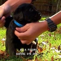 cachorro que le estan poniendo su chaleco