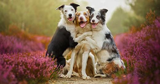 sesion de fotos con perros