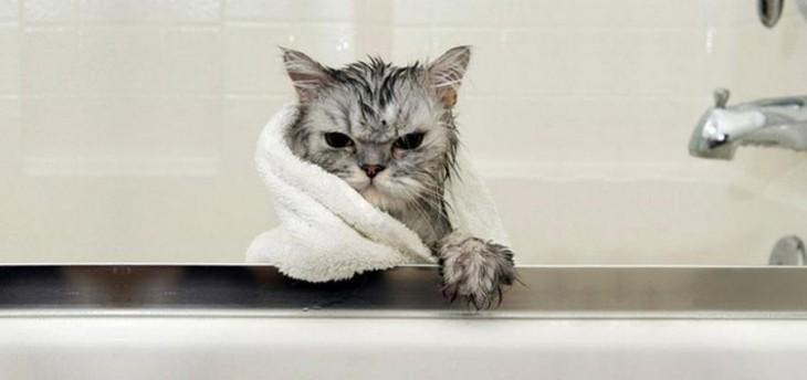 gato con toalla