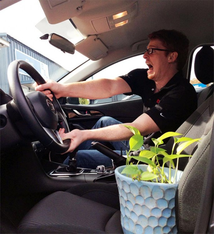 planta conduciendo un automovil