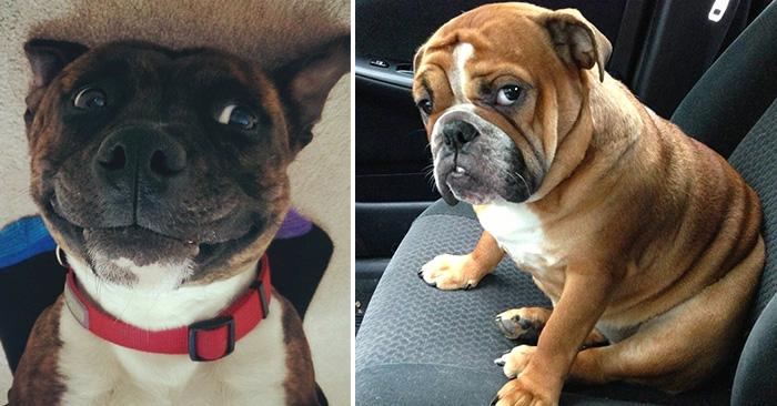 caras graciosas que hacen los perros en situaciones normales