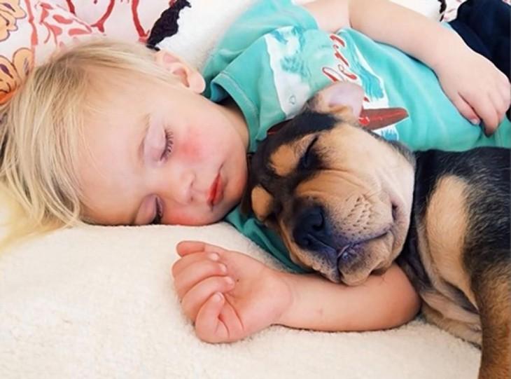 perrito y niño tomando una siesta