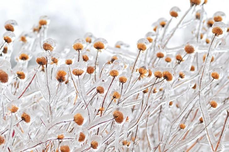 plantas congeladas