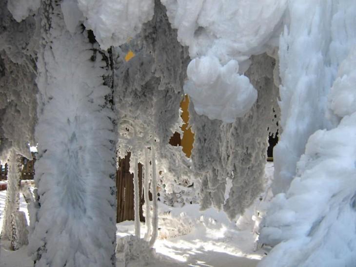 árbol lleno de nieve en las ramas