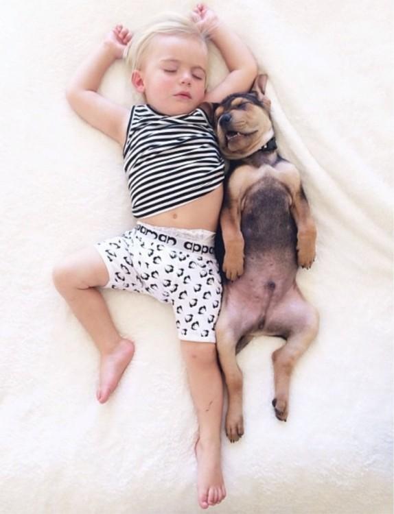 perro dormido con la boca abierta enseñando colmillos