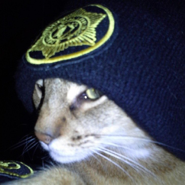 gato policía