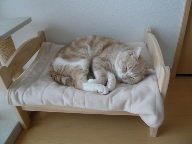 gato durmiendo en cama de muñecas