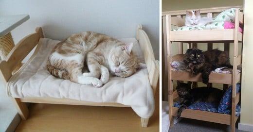 japones transforma cama de muñecas en camas de gatos