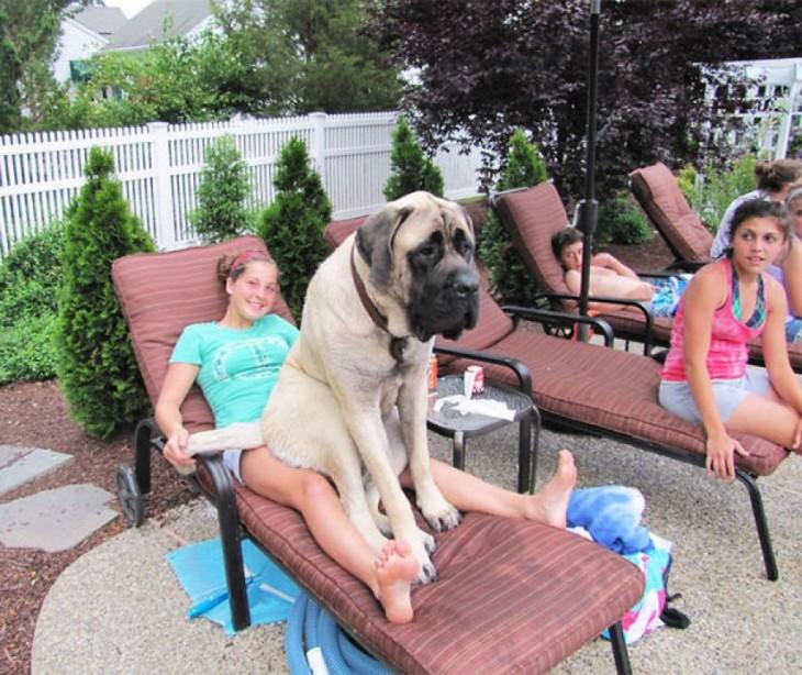 Estos 20 perros no se han dado cuenta de lo grandes que son