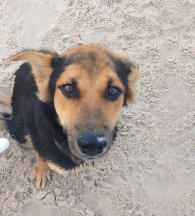 perrito sentado en la arena