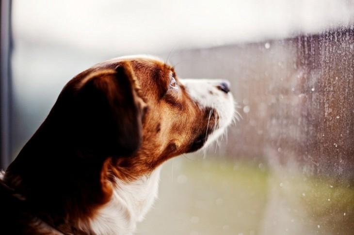 Cara de un perro mirando a través de una ventana con lluvia