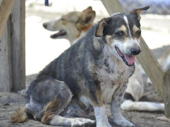 como cambia un perro antes y después de maltratos