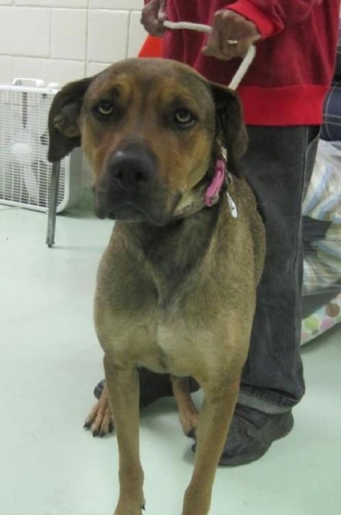 Perros antes y despues de ser rescatados (45)