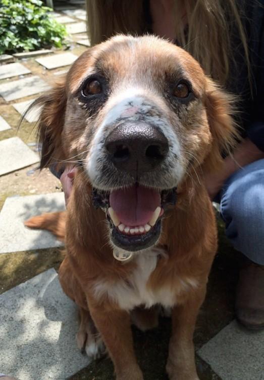 25 Fotos de Perros Antes y Después de ser Rescatados