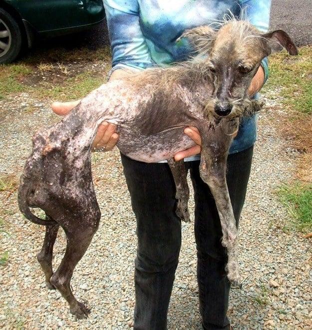 Fotos Conmovedoras De Perros Antes Y Despu 233 S De Su Rescate