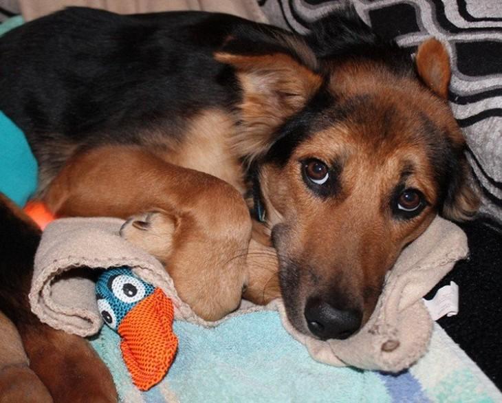 perrito triste acostado con sus juguetes