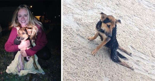 adopcion de leo el perro paralitico en una playa de tailandia