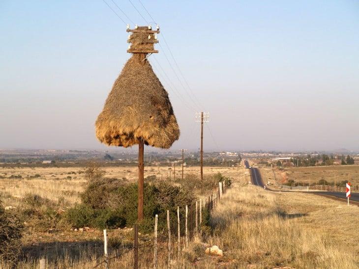 nido hecho de paja en un poste en su parte superior