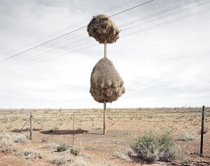 nido de pajaros hecho de paja en un poste de luzz