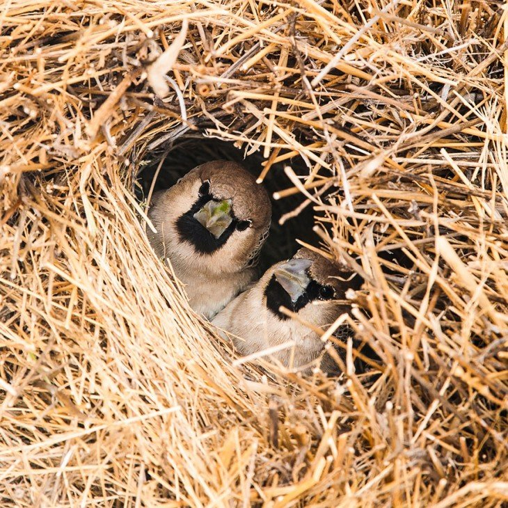 dos pajaros que se ven por medio del agujero de un nido